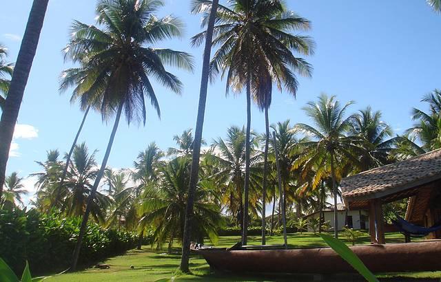 Belos coqueiros