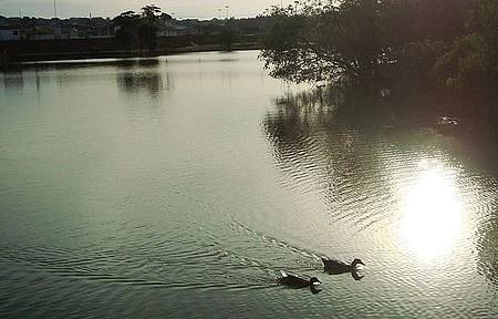 Parque das Aguas - Natureza em Harmonia