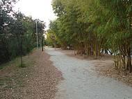 Caminhar Aqui É Sempre Agradavel