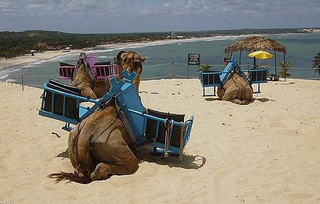 Genipabu - Camelos nas dunas e vista da praia.