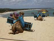 Camelos nas dunas e vista da praia.