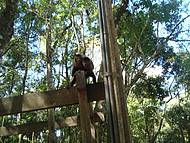 Macacos soltos na natureza
