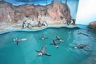 Acqua Mundo é uma das principais atrações
