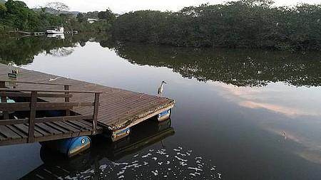 Piçarras SC - Garça - Rio Piçarras