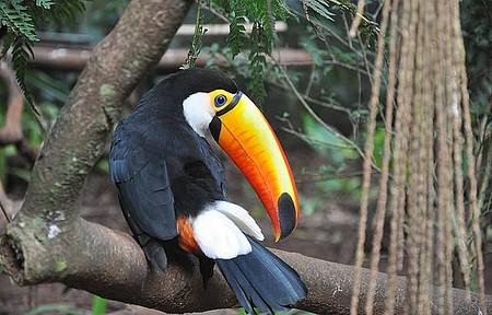 Parque das Aves - Um lindo tucano