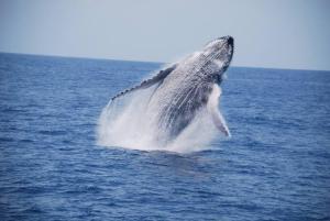 Temporada de observação de baleias