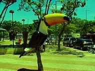 Telefone público retratando a fauna brasileira