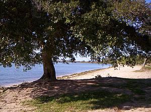 Praia da Barrinha: Figueiras garantem sombra por toda a extensão -