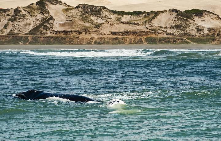 Baleias marcam presença em Ribanceira
