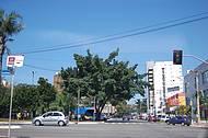 Em Goiânia  existem árvores em todas as ruas.