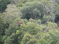 Canopy da Serra Gaúcha