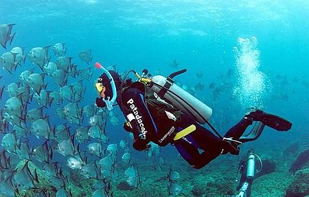 Rica vida marinha encanta mergulhadores profissionais e amadores
