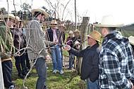 Visitantes participam das podas das videiras