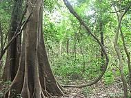 Floresta Amazônica próxima à Manaus