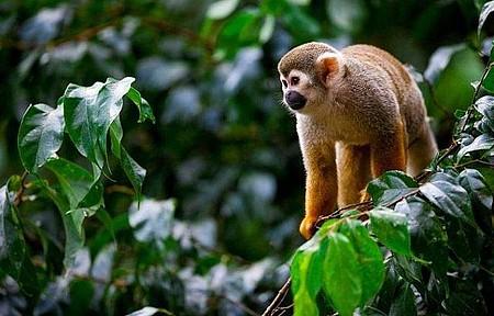 Serra dos Carajás - Animais silvestres e muitos ipês dão vida à região