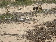 Urubus na Praia