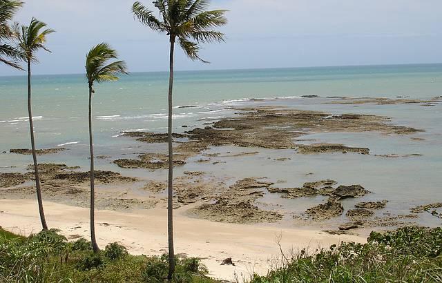 De Manhã , Mar Azul e Cristalino e Muita Vegetação.