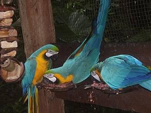 Parque das Aves: Cores e festa tomam conta do espa�o<br>