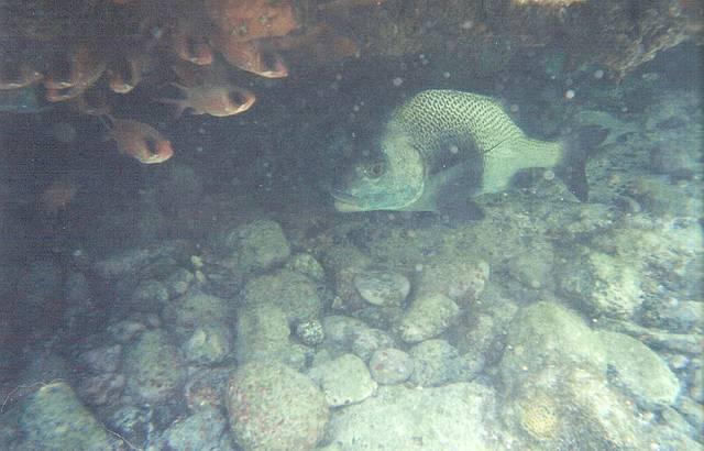Foto subaquática da Praia da Atalaia