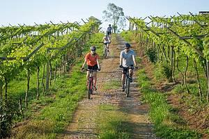 Passear de bicicleta nos vinhedos