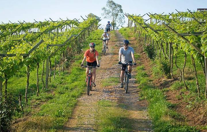 Vinhedos são explorados de bike