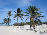 Coqueirais de Cumbuco