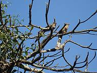 Pássaros ao entardecer