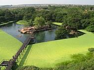 Lagoa é um verdadeiro oásis em meio à vegetação