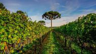 Serra Catarinense: Vinhos para todas as estações!