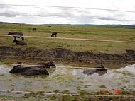 Fazenda de Búfalos. Vale a pena conhecer!