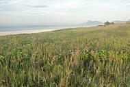 Vegetação nativa da praia de Itaipuaçu