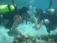 Mergulho nas piscinas naturais em Maragogi. Imperd�vel!