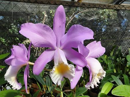 Reserva Kautsky - Orquídeas por todos os lados