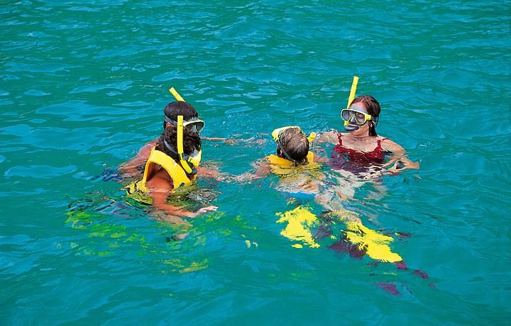 Observar a rica vida marinha é programa para todas as idades
