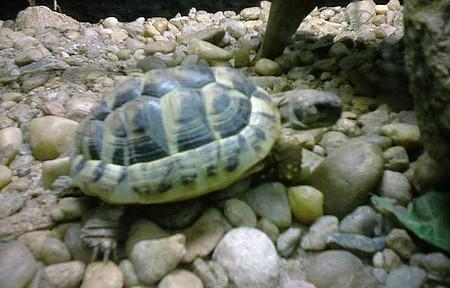 ZooParque Itatiba - Jabuti