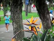 Pista de caminhada e corrida no Parque Barigui em Curitiba