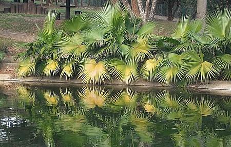 Parque do Varvito - Lago