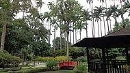 Jd Botânico Jardim Japonês