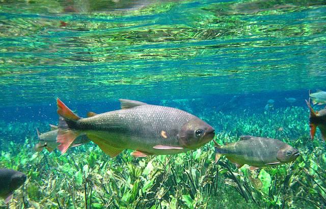 A nascente do Aquário Natural tem uma beleza que impressiona!!