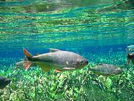 A nascente do Aqu�rio Natural tem uma beleza que impressiona!!