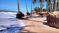 Praia dos coqueirais