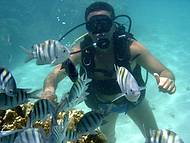 Mergulhando Junto Aos Peixes