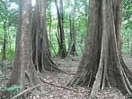 Floresta Amaz�nica pr�xima � Manaus