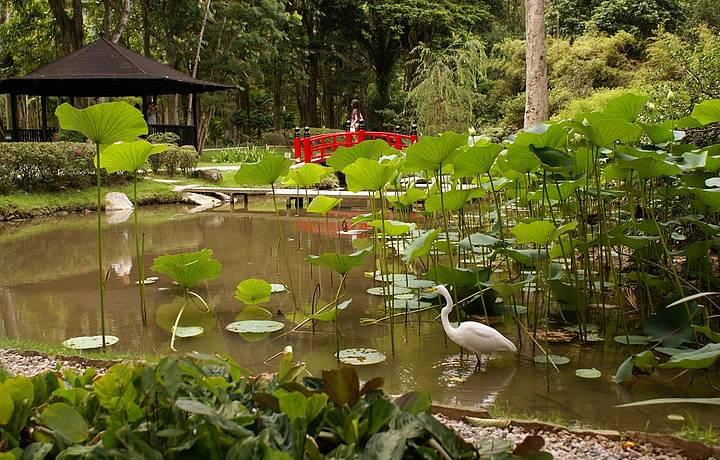 Jardim Japonês é uma das atrações