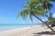 De um lado do coqueiro Praia de Barra Grande, do outro Antunes