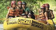 Cães também participam do rafting