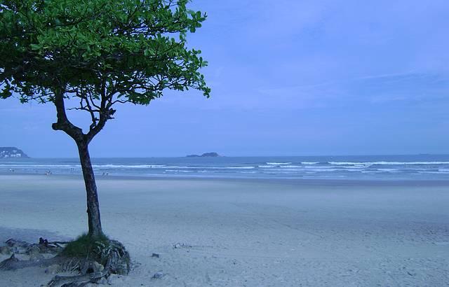 �rvore da praia da Enseada