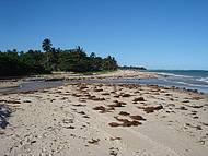 Fim de Tarde na Praia de Itacimirim