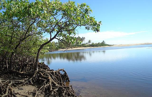 Entre o mangue e o rio Caraíva