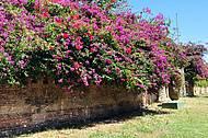 Flores em Cumbuco